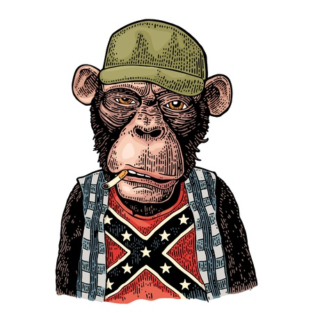 Monkey redneck smokes cigarette in trucker cap, checkered shirt, t-shirt with the flag of the Confederate. Vintage color engraving illustration for poster. Isolated on white background