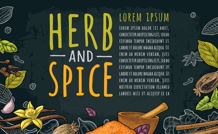 Poster with pepper, cinnamon, mint, cloves, cocoa, poppy, chilli, vanilla, bay leaf, anise, garlic ,cardamom, ginger. HERB and SPICE handwriting lettering. Vector color vintage engraving on dark