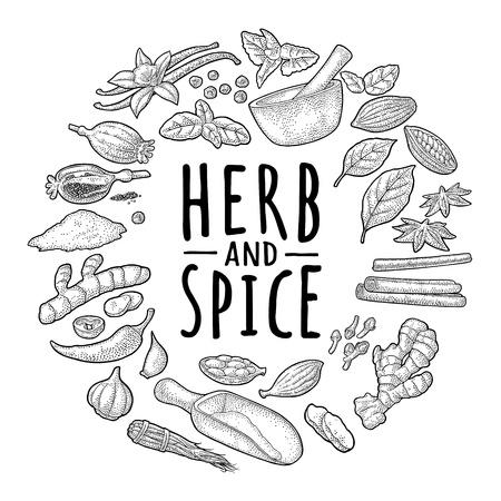 Circle shape set spices. Anise, garlic, cardamom, melissa, cinnamon, cocoa, vanilla, poppy, chilli, ginger, clove, mortar, scoop, pestle , pepper. Vector black vintage engraving isolated on white