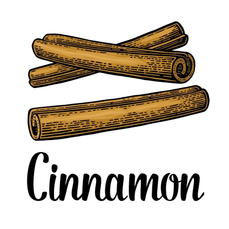 Cinnamon stick. Isolated on white background. Vector color vintage engraving illustration. Hand drawn design element and lettering for label and poster
