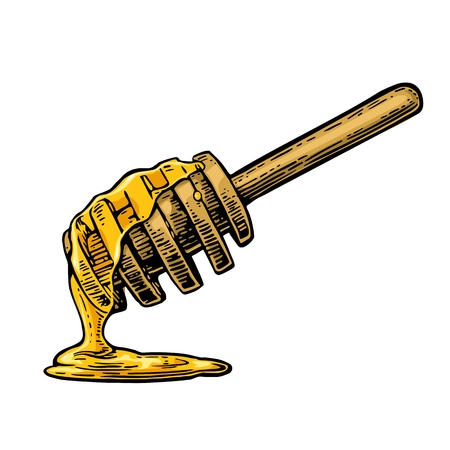 Honey dripping from wooden stick. Vintage color engraved illustration. Hand drawn sketch isolated on white background.