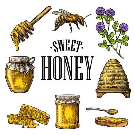 Conjunto de miel. Tarros de miel, abeja, colmena, trébol, panal. Ilustración de vector vintage grabado