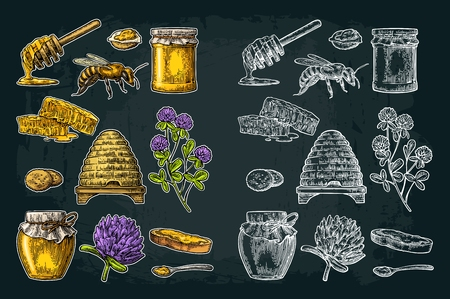 Honey set. Jars of honey, bee, hive, clover, spoon, cracker, bread and honeycomb. Vector vintage color and white engraved illustration. Isolated on dark background Illustration