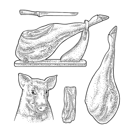 Pig head, knife and jamon on horizontal wood stand. Vector black vintage engraving illustration for menu, web and label. Hand drawn in a graphic style.