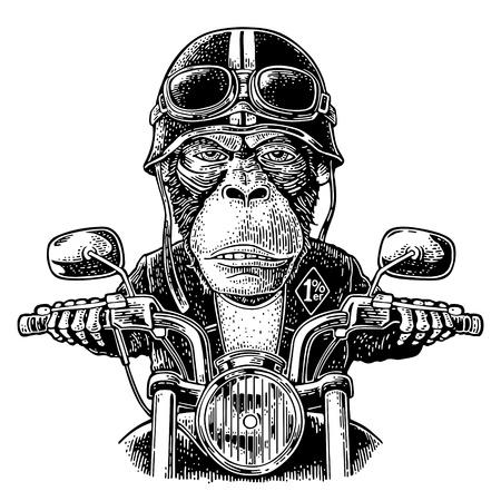 Scimmia con il casco e gli occhiali alla guida di una motocicletta. Incisione d'epoca disegnata a mano di vettore. Isolato su sfondo bianco. Per poster e t-shirt biker club