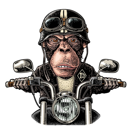 Monkey in the helmet and glasses driving a motorcycle rides. Vector hand drawn color vintage engraving. Isolated on white background. For poster and t-shirt biker club Ilustração