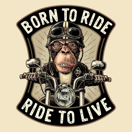 Monkey in the helmet and glasses driving a motorcycle rides. Vector hand drawn vintage engraving. Isolated on white background. Born to ride lettering. For poster and t-shirt biker club