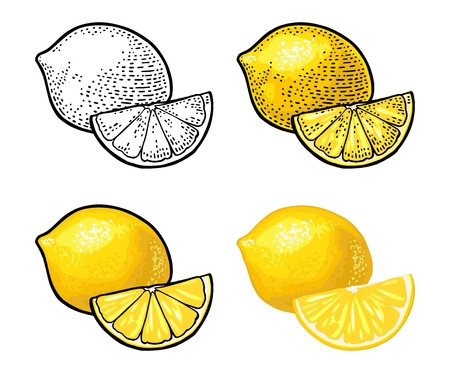 Lemon Slice and and whole. Isolated on white background. Vector black and color vintage engraving and flat illustration. Hand drawn design element for label and poster Stockfoto - 122489161