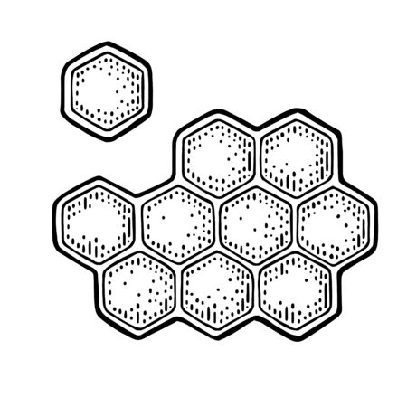 Honeycomb. Engraving vintage vector black illustration. Isolated on white