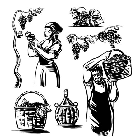 Hombres y mujeres cosechan las uvas en el viñedo. Ilustración de vector vintage en blanco y negro para etiqueta, cartel, icono, diseño web.