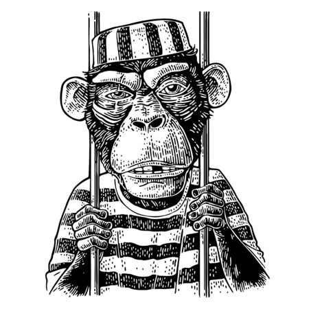 Arrested Monkey dressed in prisoner's robe holds the bars. Born to be free handwriting lettering. Vintage black engraving illustration for poster.
