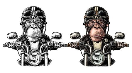 Monkey in the helmet and glasses driving a motorcycle rides. Vector hand drawn color vintage engraving. Isolated on white background. For poster and t-shirt biker club Illusztráció