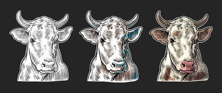Cows head. Hand drawn in a graphic style. Vecteurs