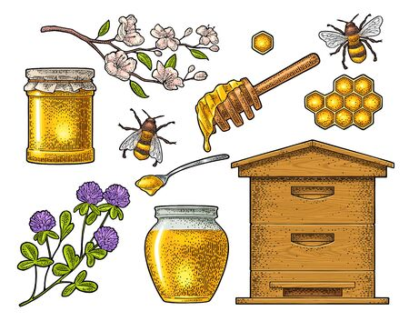 Honey set. Vector vintage color engraving isolated on white Иллюстрация