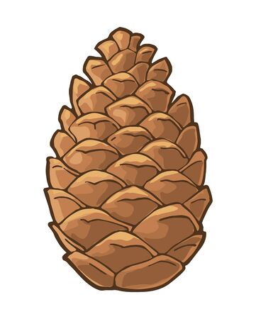 Pine cone. Isolated on white background. Vector vintage color flat illustration.