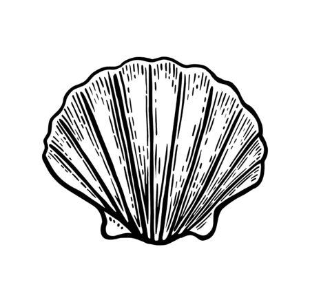 Muschel Jakobsmuschel. Schwarze Gravur Vintage Illustration. Isoliert auf weißem Hintergrund.