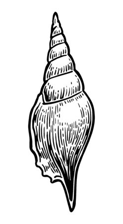 Sea shell. Black engraving vintage illustration. Isolated on white background.
