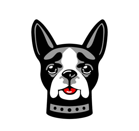 Dog boston terrier isolated on white background. Vector white, red and gray flat illustration.