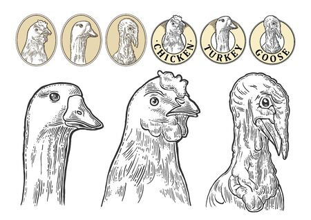 Heads chicken, goose and turkey. Vintage monochrome vector engraving illustration Foto de archivo - 140666809
