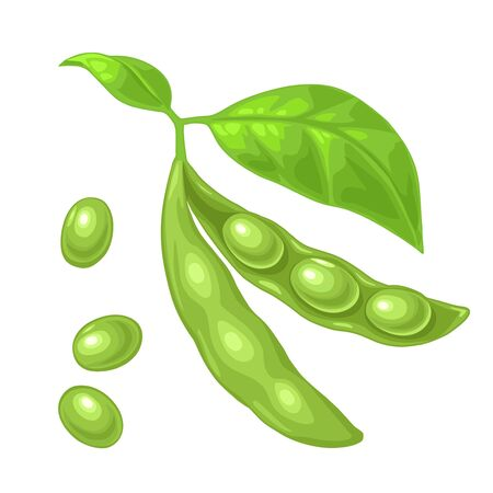 Soybean pod close and open with leaves and seeds. Vector color flat icon for menu, poster, label. Isolated on white background
