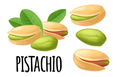 Pistachio nut with and without shell. Vector color realistic illustration. Isolated on white background.