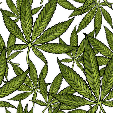 Seamless pattern with marijuana leaf. Hand drawn design element cannabis. Vintage color vector engraving illustration for label, poster, web. Isolated on white background Vecteurs
