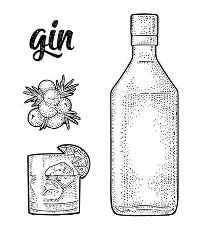 Glass, bottle and branch of Juniper with berries. Handwriting lettering gin. Vintage vector black engraving illustration for label, poster, web. Isolated on white background Vector Illustration
