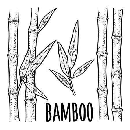 Bamboo trees with leaf. Hand drawn design element. Vintage vector engraving illustration. Isolated on white background. Vektorgrafik