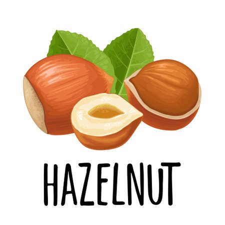 Set whole and half nut seed with green leaves. Vector color realistic illustration. Isolated on white background. Handwriting lettering hazelnut Ilustração