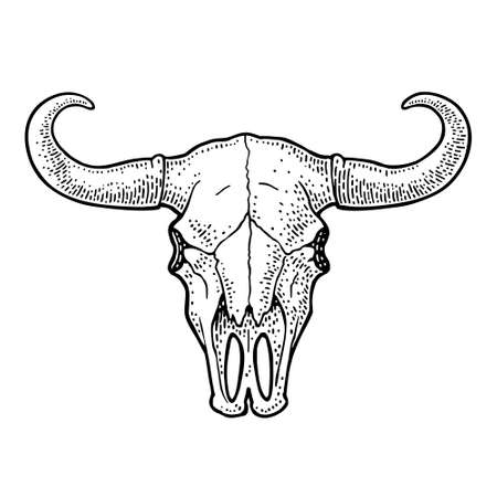 Bull or cow skull with horns. Vintage black vector engraving illustration for info graphic, poster, web. Isolated on white background. Hand drawn in a graphic style. Illustration