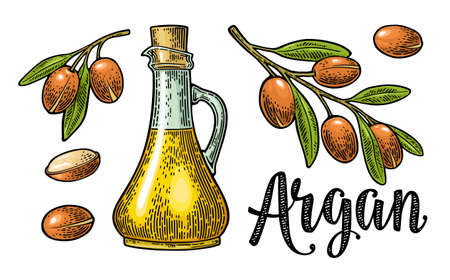 Set of argan branches, leaves, nuts, bottle with oil. Vector color vintage engraving illustration isolated on white background