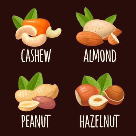 Set whole and half nut seed. Vector color realistic illustration. Isolated on black background. Handwriting lettering hazelnut, peanut, almond, cashew Ilustração