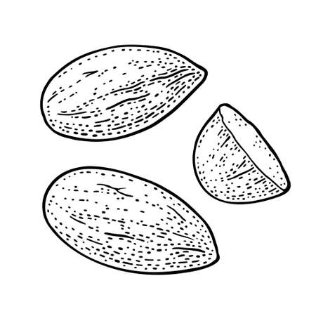 Two whole and one half one half almonds nuts without shell. Vector engraving black vintage illustration. Isolated on white background.