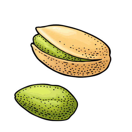 Pistachio nut with and without shell. Vector engraving color vintage illustration. Isolated on white background.