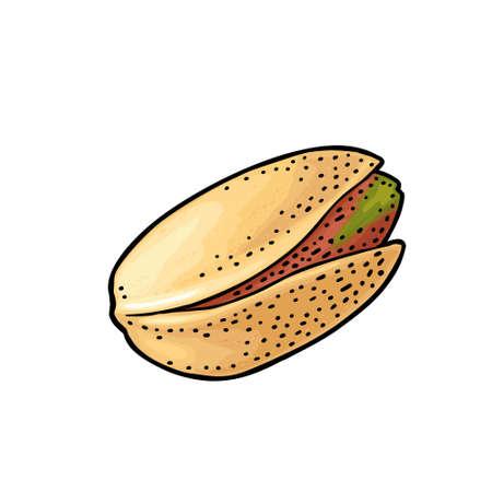 Pistachio nut in shell. Vector engraving color vintage illustration. Isolated on white background. Ilustração