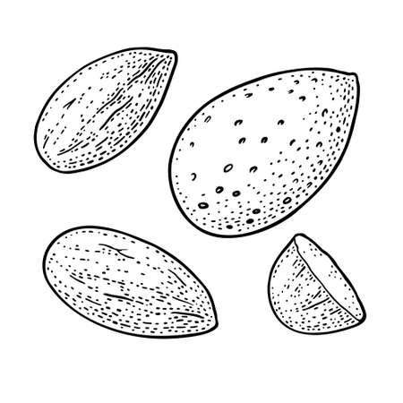 Whole and half half almond nuts with and without shell. Vector engraving black vintage illustration. Isolated on white background.