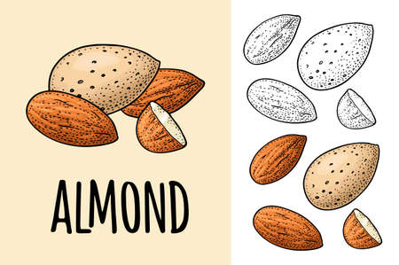 Whole and half half almonds nuts with and without shell. Vector engraving color vintage illustration. Isolated on white background. Stock Illustratie