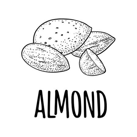 Whole and half half almonds nuts with and without shell. Vector engraving black vintage illustration. Isolated on white background.