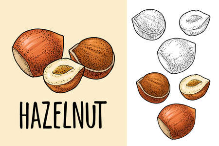 Set whole and half nut seed. Vector color engraving vintage illustration. Isolated on white background. Handwriting lettering hazelnut Stock Illustratie