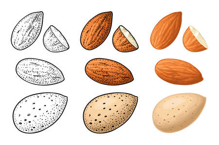 Whole and half half almonds nuts with and without shell. Vector engraving color and monochrome vintage illustration. Isolated on white background.