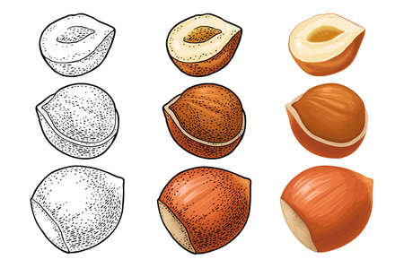 Set whole and half hazelnut. Vector color and monochrome engraving vintage illustration. Isolated on white background.