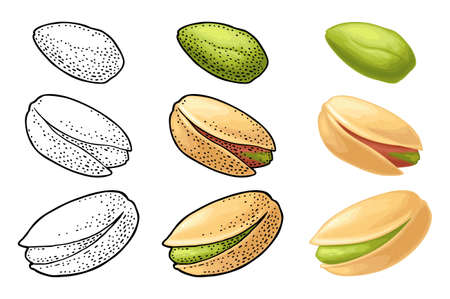 Pistachio nut with and without shell. Vector engraving color and monochrome vintage illustration. Isolated on white background.