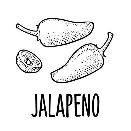 Whole and slice pepper jalapeno. Vector black vintage engraving illustration for menu, poster, label. Isolated on white background. Hand drawn design element