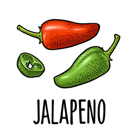 Whole and slice pepper jalapeno. Vector color vintage engraving illustration for menu, poster, label. Isolated on white background. Hand drawn design element Stock Illustratie