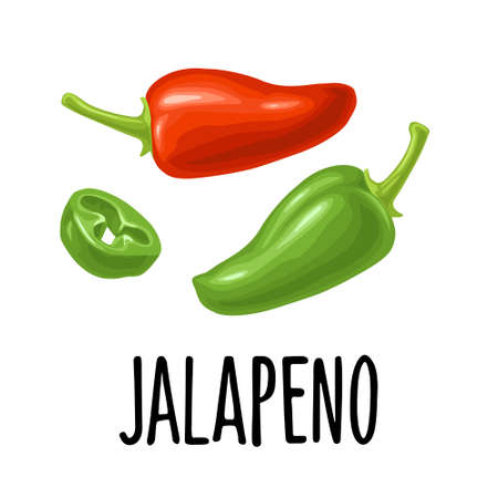 Whole and slice pepper jalapeno. Vector color illustration for menu, poster, label. Isolated on white background. Hand drawn design element