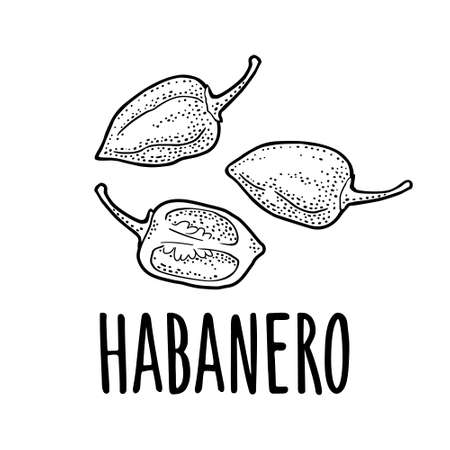 Whole and half pepper habanero. Vector black vintage engraving illustration for menu, poster, label. Isolated on white background. Hand drawn design element