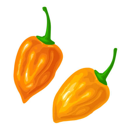 Two whole peppers habanero. Vector color illustration for menu, poster, label. Isolated on white background. Hand drawn design element