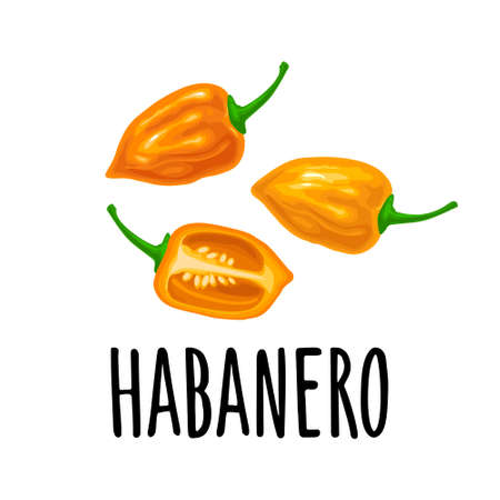 Whole and half pepper habanero. Vector color illustration for menu, poster, label. Isolated on white background. Hand drawn design element Stock Illustratie