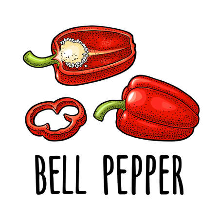 Whole, half and slice red sweet bell pepper. Vector color vintage engraving illustration for menu, poster, label. Isolated on white background. Hand drawn design element