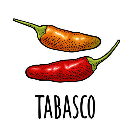 Whole red and orange pepper tabasco. Vector color vintage engraving realistic illustration for menu, poster, label. Isolated on white background. Hand drawn design element